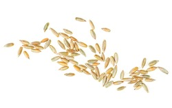 Raw rye grains isolated on a white background, top view. Healthy grains and cereals.