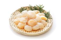 Raw scallops on white background.