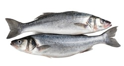 Raw seabass. Two fresh sea bass fishes isolated on white background with clipping path