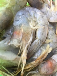 Raw, Uncooked, Dead, white and black color fresh Fresh Shrimp full body half circle curled with red antennae Prawn shrimp on tray ready  to cook Thai and japanese food sold at the market in gree