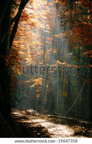 Ray of light in a forest. Autumn theme