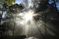 ray of  light, ray, trees, forest