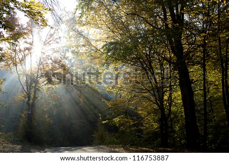 rays in the forest