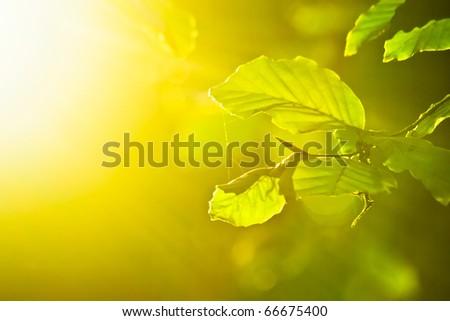 rays of light on leaves in morning light