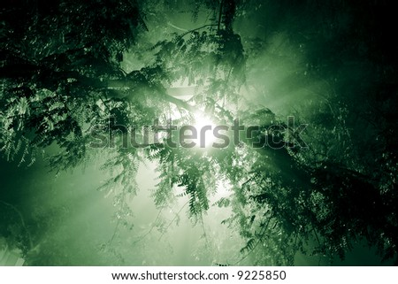 Rays of light shining through tree branches