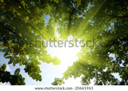 rays of sun in deep forest - stock photo