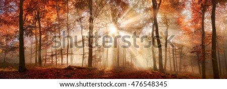 Rays of sunlight in a misty forest in autumn, a panorama with magical atmosphere and warm colors #476548345