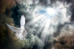 Rays of the bright sun break through the stormy sky covered with dark clouds and light up a flying white dove