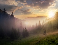 rays of the evening sun breaking through the clouds and fog to the meadow of coniferous forests in mountains