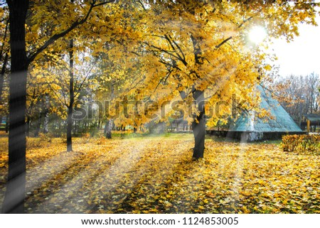 rays of the sun, going diagonally, make their way through the yellow leaves of trees in the autumn in the park