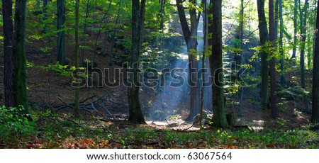 rays of the sun in autumn forest