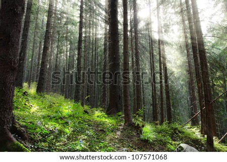 rays of the sun in forest on the mountain