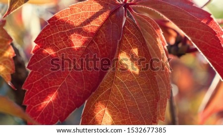 Rays of the sun make their way through the autumn foliage, beautiful autumn natural background