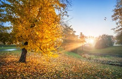 Rays of the sun through golden autumn leaves on trees in Tsaritsyno park in Moscow and two birds in the sky on an early sunny morning