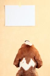 reading,focus on a dog head.