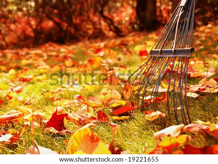 ready to rake the leaves