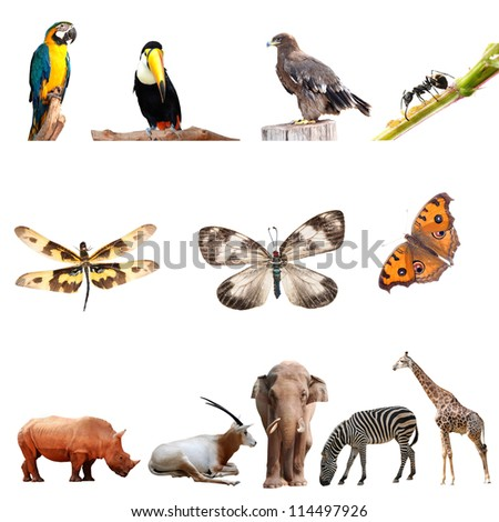 real animal collection isolated on white