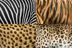 Real animal skin