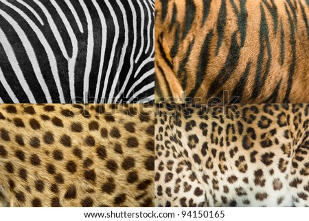 Real animal skin #94150165