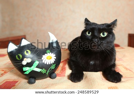 real black cat and toy cat