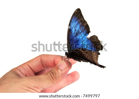 Real Butterfly on Hand