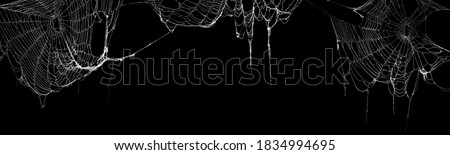 Real creepy spider webs hanging on black banner Photo stock ©