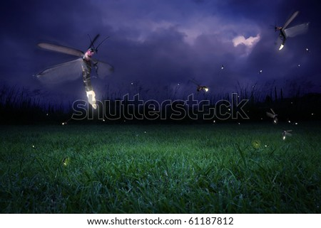 stock photo : real fireflies at a calm night