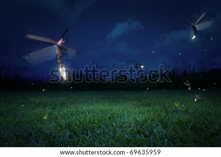 real fireflies at a calm night