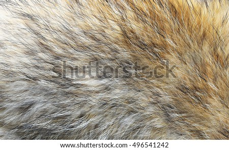 Real fox animal fur, closeup. Real natural texture, soft hairy.