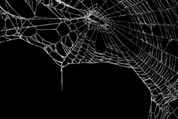 Real frost covered spider web isolated on black