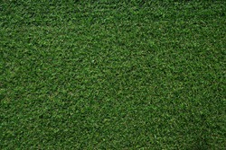 Real green grass background texture