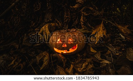 Real Hallowen Pumkin in the Forest Stock photo ©
