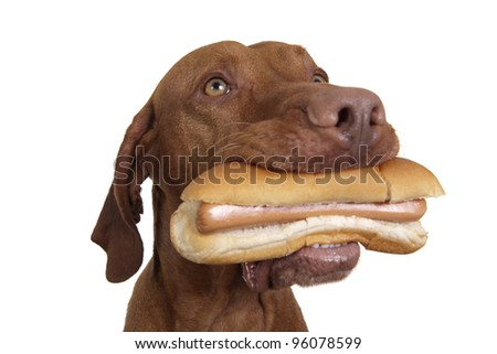 real hot dog in dogs mouth on white background