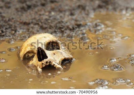 Real human skull before sunset, focused on teeth
