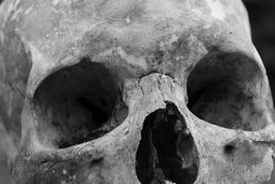 Real Human Skull close up