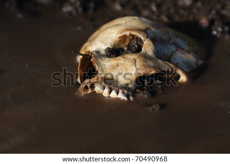 Real human skull configured as crime scene before sunset, focused on teeth