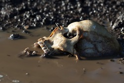 Real human skull figured as crime scene before sunset, focused on teeth