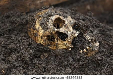 Real human skull figured as crime scene on a farm
