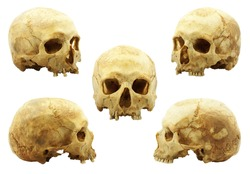 Real human skull isolated on white background, yellow lipid color absorbed into bone has been improved, multi picture