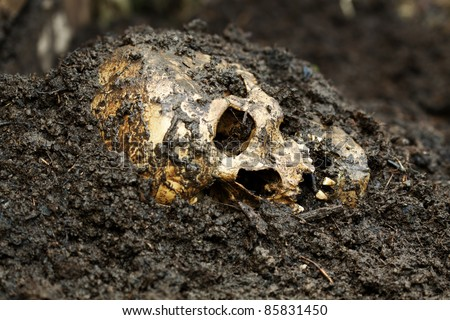 Real human skull on wet soil figured as crime scene, photography focused on teeth with narrow focus
