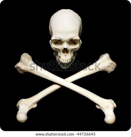 Real human skull with crossed bones