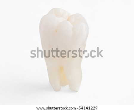 Real Human Wisdom tooth