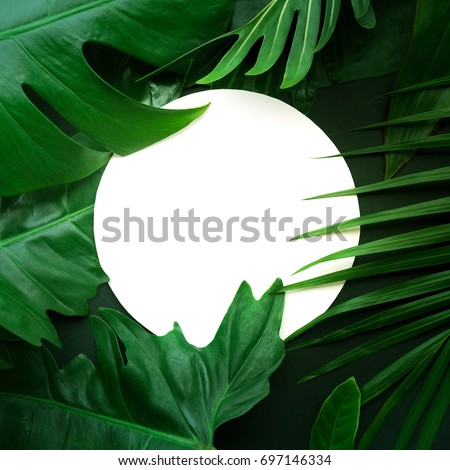 Real leaves with white copy space background.Tropical Botanical nature concepts design. - Shutterstock ID 697146334
