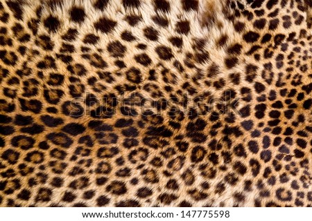 Real Leopard Skin. #147775598