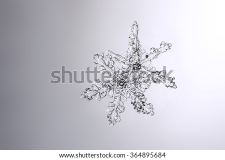 real natural snowflakes on a wet glass macro photo