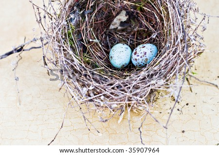 Real nest and blue spotted chipping sparrow eggs on tan craquelure background.