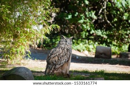 Real owl perched on the grass.