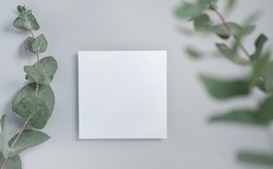 Real photo. square invitation card mockup with a eucalyptus branch. Top view with copy space, light gray background. Template for branding and advertising