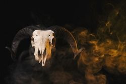 Real ram skull with horns on yellow smoky background, Halloween theme