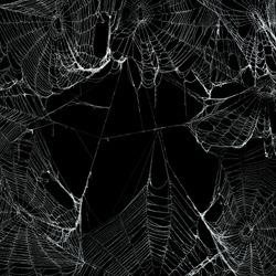 Real spooky spider webs hanging together to make a frame. Halloween background.